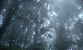 Selva tropical verde tropical brumosa, Ang Ka Nature Trail Imagen de archivo