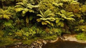 Selva tropical y cala Fotos de archivo libres de regalías