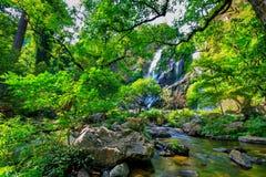 Selva tropical y corriente tropicales hermosas en bosque profundo, Fotografía de archivo libre de regalías