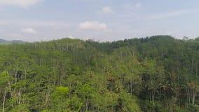 Selva tropical y montañas tropicales del paisaje metrajes