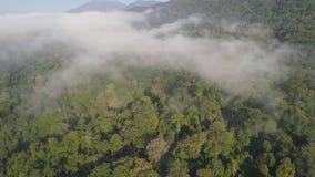 Selva tropical y montañas tropicales del paisaje almacen de video
