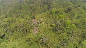 Selva tropical y monta?as tropicales del paisaje metrajes