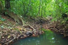Selva Vegitation imagens de stock