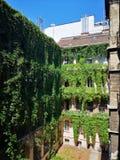 Selva verde da videira virgem em uma casa imagem de stock royalty free