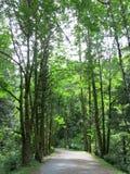 Selva virgen de la Columbia Británica Fotografía de archivo libre de regalías