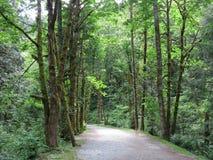 Selva virgen de la Columbia Británica Imagen de archivo libre de regalías