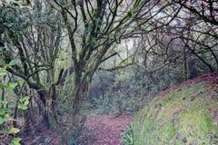 Selva y colores Foto de archivo