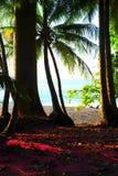 Selva y el océano Foto de archivo