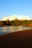 Selva y el río Fotos de archivo