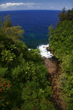 Selva y océano de Hawaii Foto de archivo