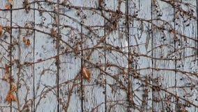 Selvagem branco da cerca filme