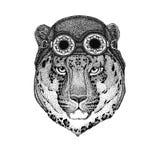 ` Selvagem do gato-o do leopardo do gato - chapéu vestindo da motocicleta do chapéu do aviador da pantera da montanha com vidros  Foto de Stock Royalty Free