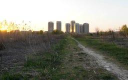Selvagem e urbano Fotos de Stock Royalty Free