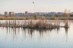 Selvagem e urbano Imagem de Stock Royalty Free
