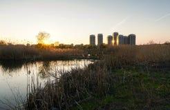 Selvagem e urbano Imagens de Stock Royalty Free