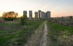 Selvagem e urbano Foto de Stock