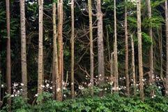 ` Selvaggio s dell'albero Fotografie Stock