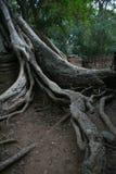 Selvas de los templos de Combodia foto de archivo