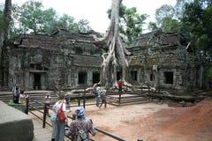 Selvas de los templos de Combodia fotografía de archivo