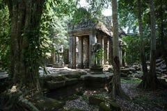 Selvas de los templos de Combodia imágenes de archivo libres de regalías