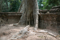 Selvas dos templos de Combodia imagens de stock royalty free