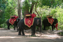 Selvas dos templos de Combodia Foto de Stock