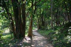 Selvas dos templos de Combodia Fotos de Stock Royalty Free