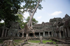Selvas dos templos de Combodia Fotografia de Stock