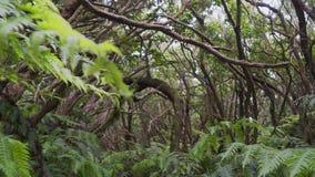 Selvas misteriosas y mágicas de una selva tropical tropical almacen de metraje de vídeo