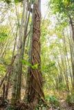 Selvas tropicais de 3Sudeste Asiático Fotos de Stock Royalty Free