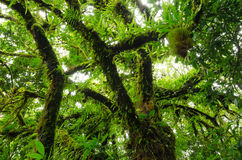 Selvas tropicales foto de archivo