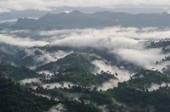 selvas tropicales Fotos de archivo