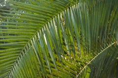 Selvas tropicales de la palma y Fotografía de archivo