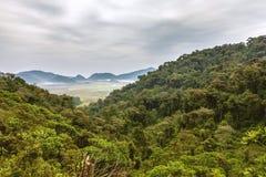 Selvas tropicales misteriosas Fotografía de archivo