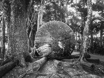 Selvas tropicales, parques, filtro de B&W fotografía de archivo libre de regalías