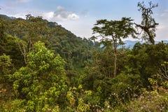 Selvas tropicales y cielo Imagen de archivo libre de regalías