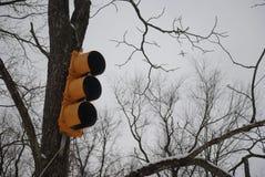 Semáforo en árbol debajo del cielo del invierno imagen de archivo