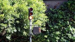Semáforo peatonal y árbol verde en el viento en el día soleado, diversidad del viaje, almacen de metraje de vídeo