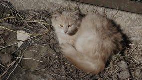 Sem abrigo do gatinho do gengibre na rua vídeos de arquivo