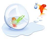 Sem abrigo do Goldfish ilustração stock