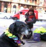 Sem abrigo e seu cão Fotos de Stock
