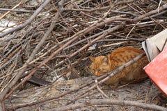 Sem abrigo, gato disperso alaranjado que encontra-se em um quintal abandonado Imagens de Stock Royalty Free