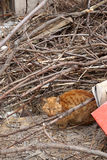 Sem abrigo, gato disperso alaranjado que encontra-se em um quintal abandonado Foto de Stock