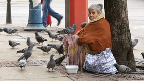 Sem abrigo que imploram pombos da mulher vídeos de arquivo