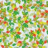Sem emenda. As folhas e os ramos. ilustração stock