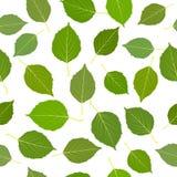 Sem emenda com as folhas verdes do vidoeiro ilustração do vetor