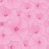 Sem emenda floral do teste padrão Fotos de Stock Royalty Free