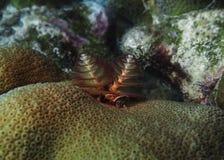 Sem-fins da árvore de Natal de Bonaire Foto de Stock Royalty Free