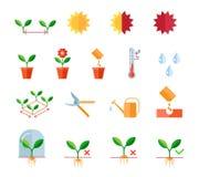 Semant et plantant des étapes d'instructions, élagage Image stock