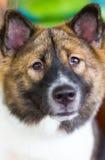 Sembler de chien méfiant Photos libres de droits